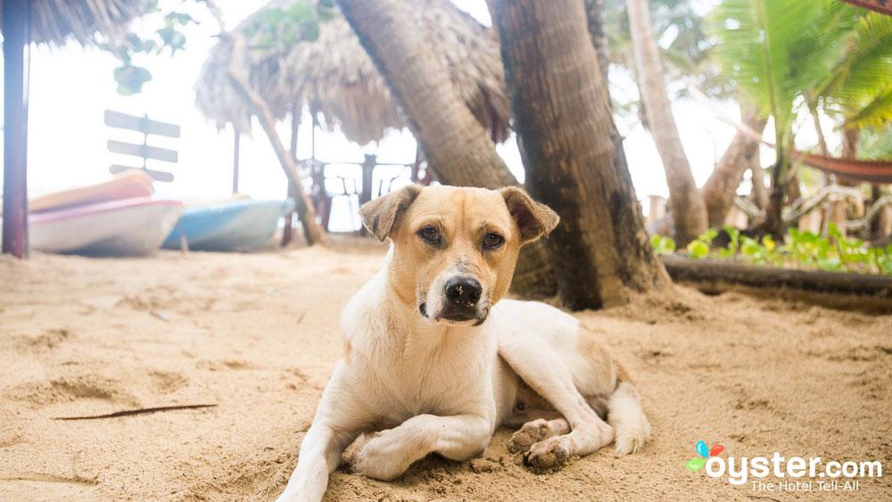 little-corn-island-nicaragua-beach-bungalow-eco-lodge-resort-hotel-animals