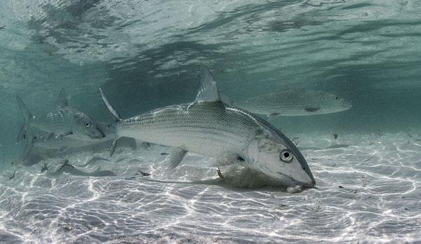 little-corn-island-nicaragua-beach-bungalow-eco-lodge-resort-hotel-sport-flats-fishing-bonefish