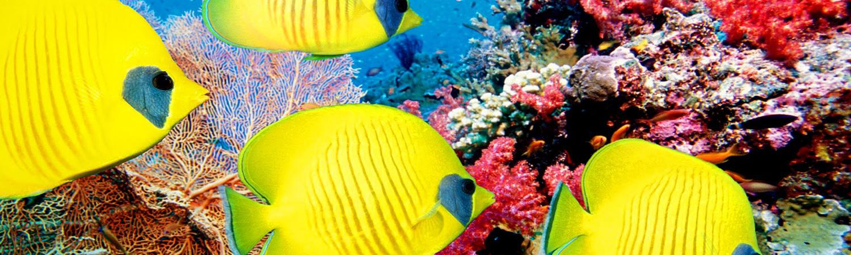 Little Corn Island Fish Snorkel Scuba Dive