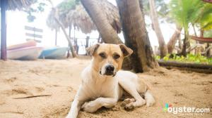 little-corn-island-nicaragua-beach-bungalow-eco-lodge-resort-hotel-dog