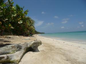 little-corn-island-beach-ocean-log